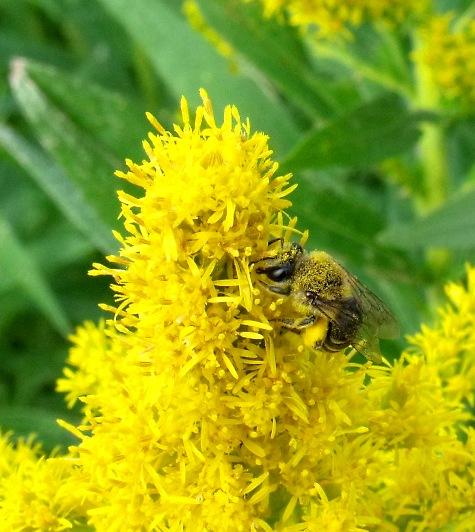 画像ー261 花と昆虫 005-2