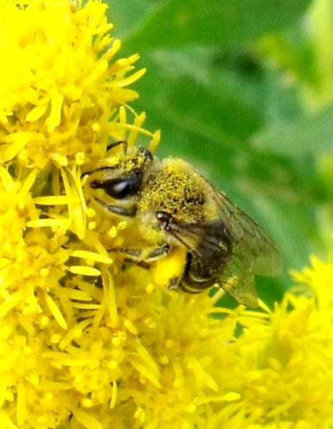 画像ー261 花と昆虫 005-3
