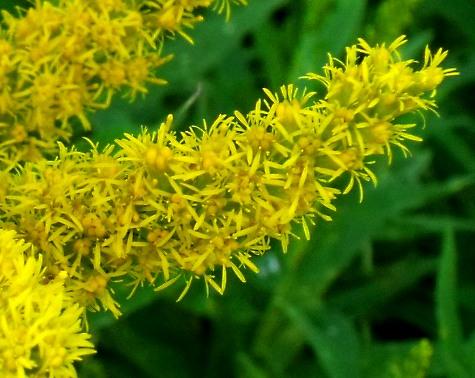 画像ー261 花と昆虫 006-2