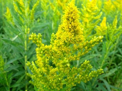 画像ー261 花と昆虫 012-2