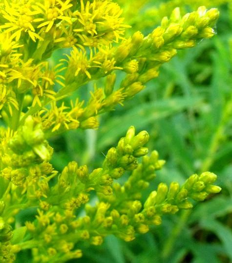 画像ー261 花と昆虫 012-4
