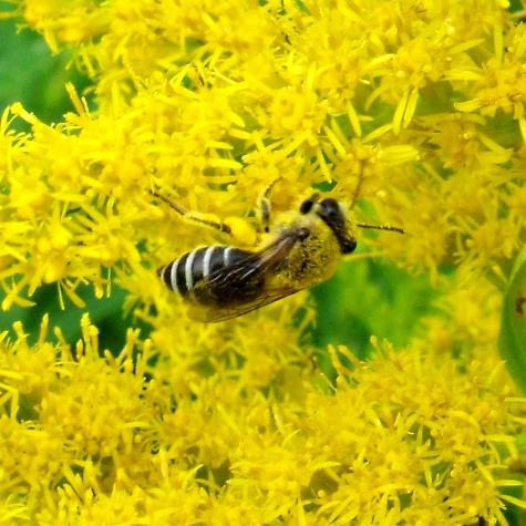画像ー261 花と昆虫 008-2