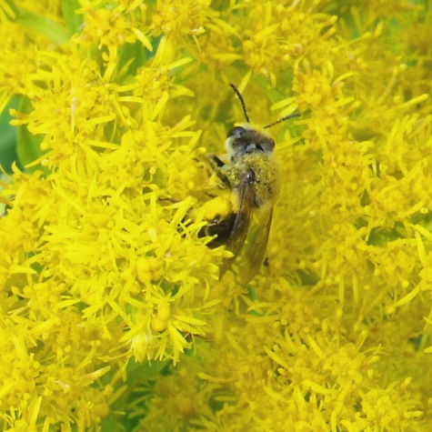 画像ー261 花と昆虫 009-2