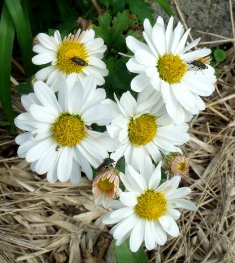 画像ー261 花と昆虫 016-2