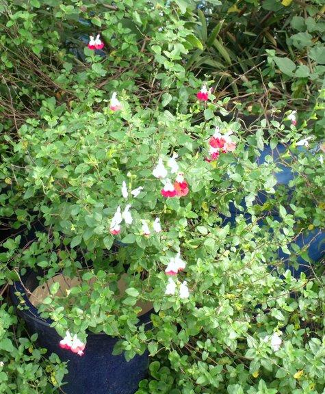 画像ー261 花と昆虫 013-2