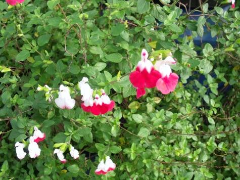 画像ー261 花と昆虫 014-2