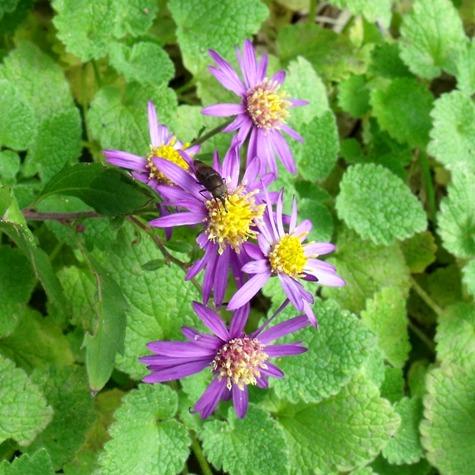 画像ー261 花と昆虫 015-2