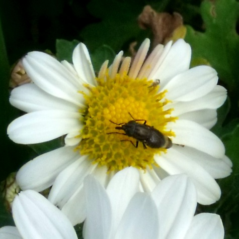 画像ー261 花と昆虫 016-3