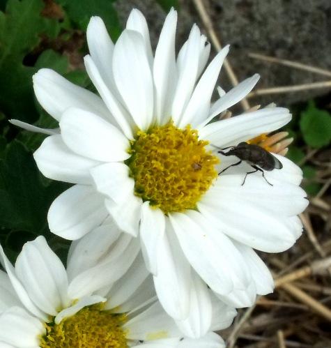 画像ー261 花と昆虫 016-4