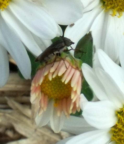 画像ー261 花と昆虫 016-5
