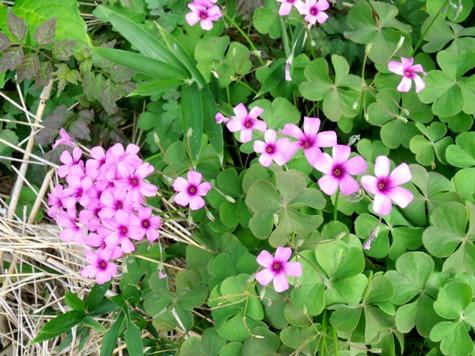 画像ー261 花と昆虫 017-2