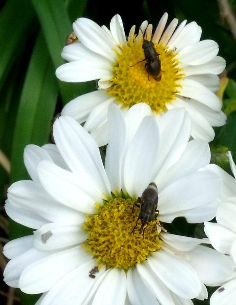 画像ー261 花と昆虫 021-3