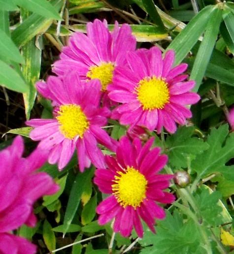 画像ー261 花と昆虫 019-2