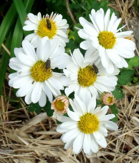 画像ー261 花と昆虫 021-2