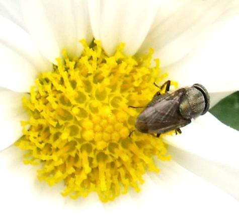 画像ー261 花と昆虫 029-2