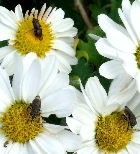 画像ー261 花と昆虫 021-4