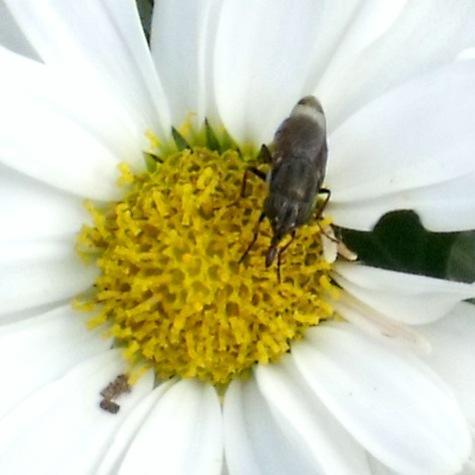 画像ー261 花と昆虫 021-5