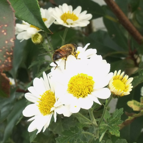 画像ー261 花と昆虫 024-2