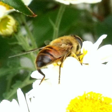 画像ー261 花と昆虫 024-3