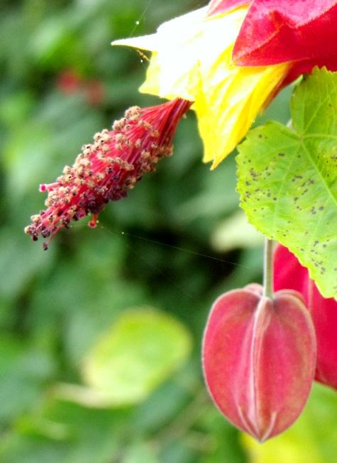 画像ー261 花と昆虫 031-3
