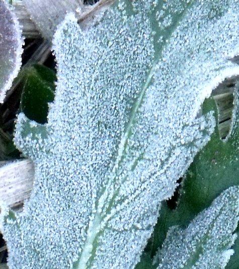 画像ー268 初氷 028-4