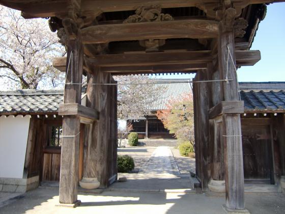 安土の桜2012-04