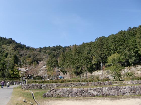 安土の桜2012-13