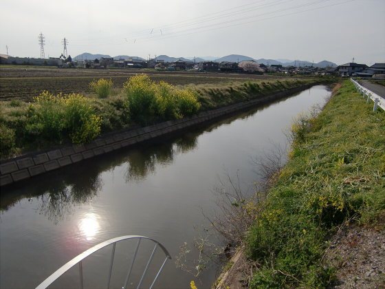 安土の桜2012-18