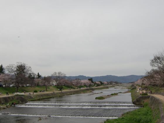 鴨川の桜~白峯神社01