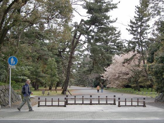 鴨川の桜~白峯神社05