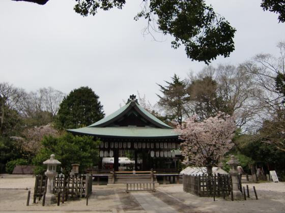 鴨川の桜~白峯神社09