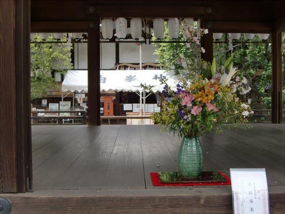 鴨川の桜~白峯神社10