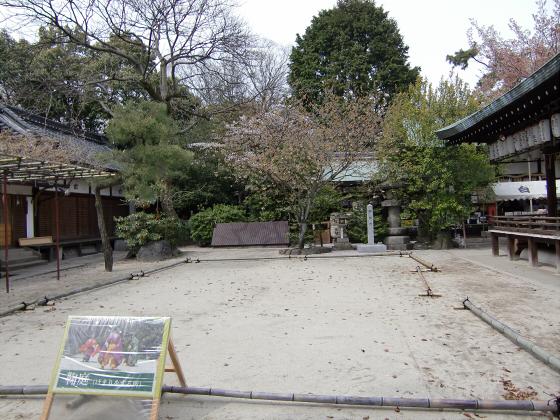 鴨川の桜~白峯神社13