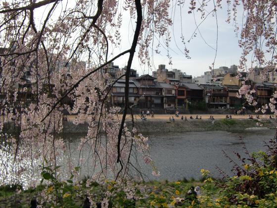 京都の桜2012-番外編04