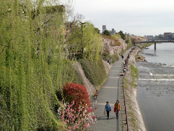 京都の桜2012-番外編10