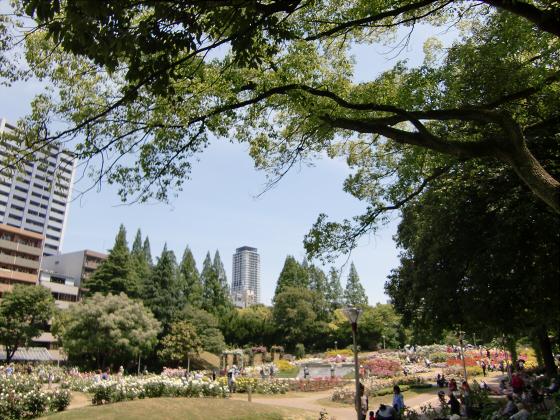 靱(うつぼ)公園のバラ園02