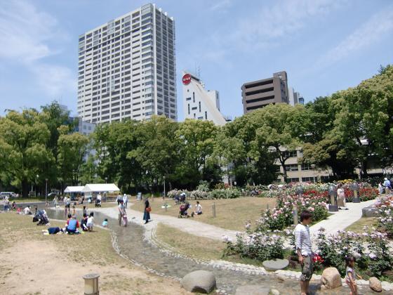 靱(うつぼ)公園のバラ園03