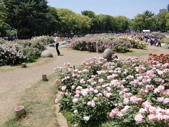 靱(うつぼ)公園のバラ園09