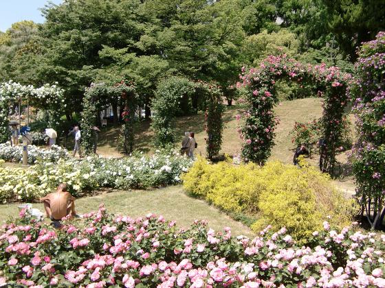 靱(うつぼ)公園のバラ園10