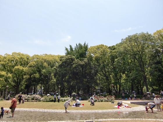 靱(うつぼ)公園のバラ園15