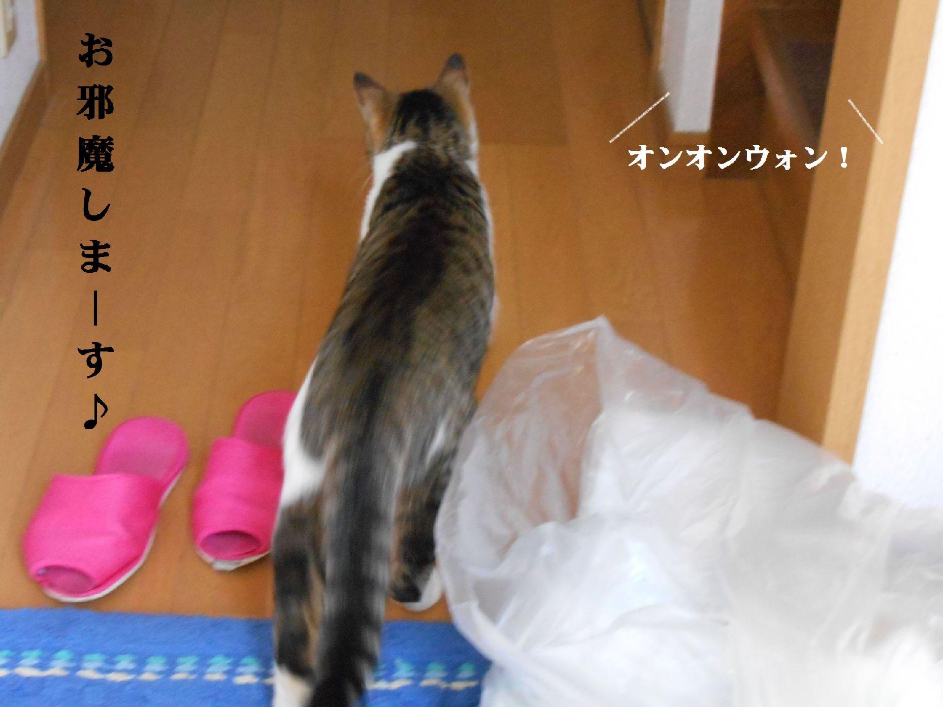 猫さん再び
