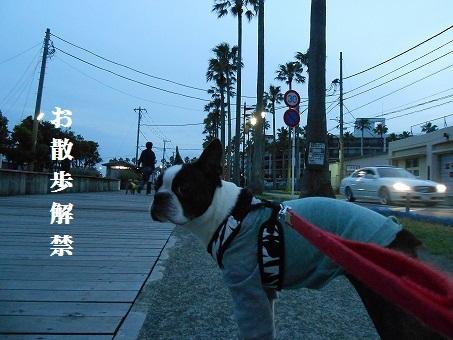 お散歩解禁