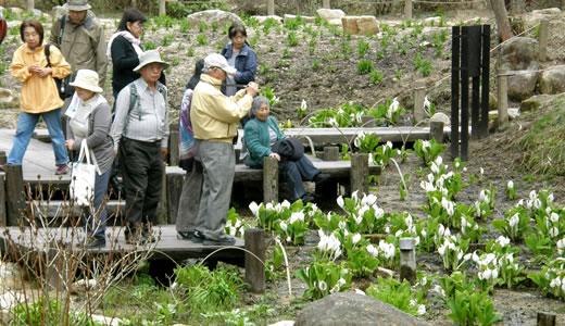 六甲高山植物園・六甲オルゴールミュージアム2012・春-3