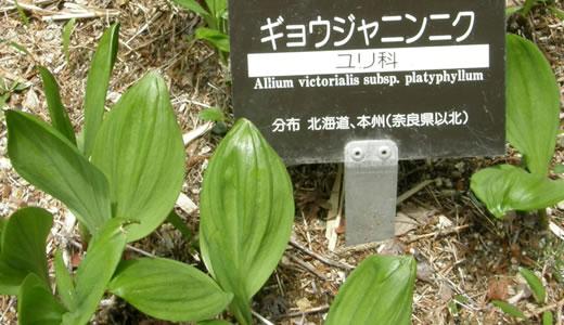 六甲高山植物園2012・春(2)-1