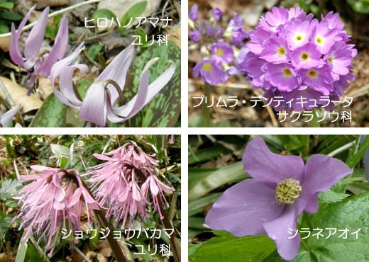 六甲高山植物園2012・春(2)-3