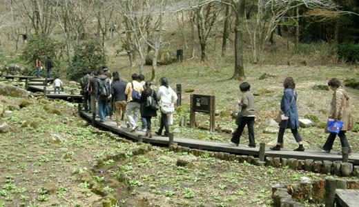 六甲高山植物園2012・春-2