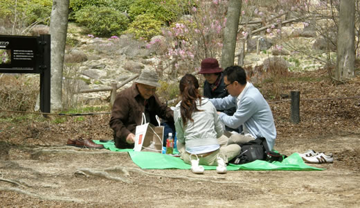 六甲高山植物園2012・春-3