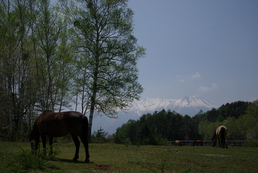 木曽馬の里02