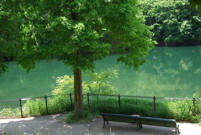 花フェスタ記念公園06