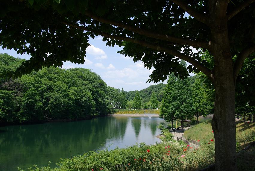 花フェスタ記念公園05